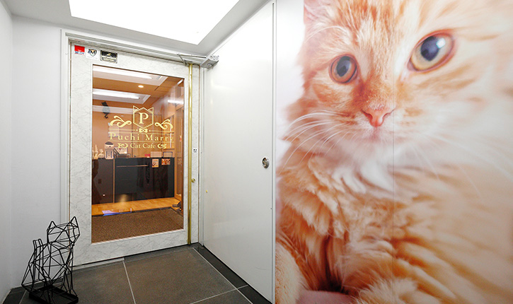 猫カフェPuchiMarry